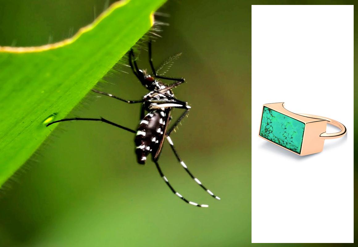 imageT Dengue